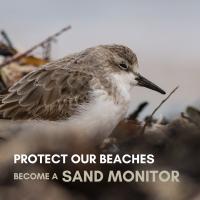 Point Lonsdale Sand Monitoring Program